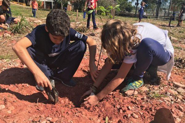 Recuperação ecológica a muitas mãos no Sidarta